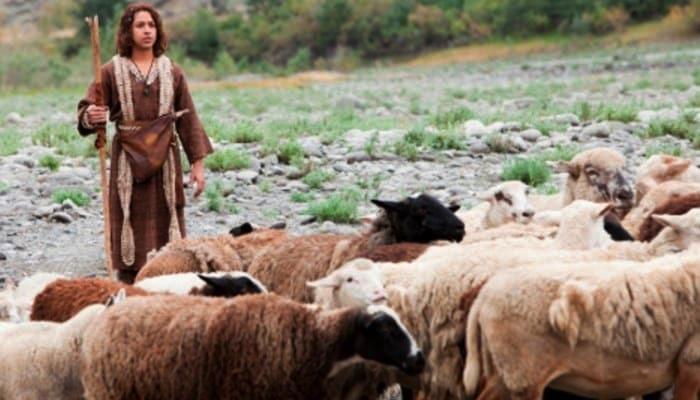 pastor de avejas 1